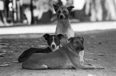 perros-callejeros1